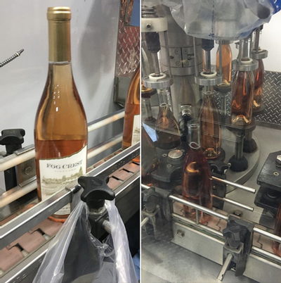 Rosé bottling day Fog Crest Vineyard